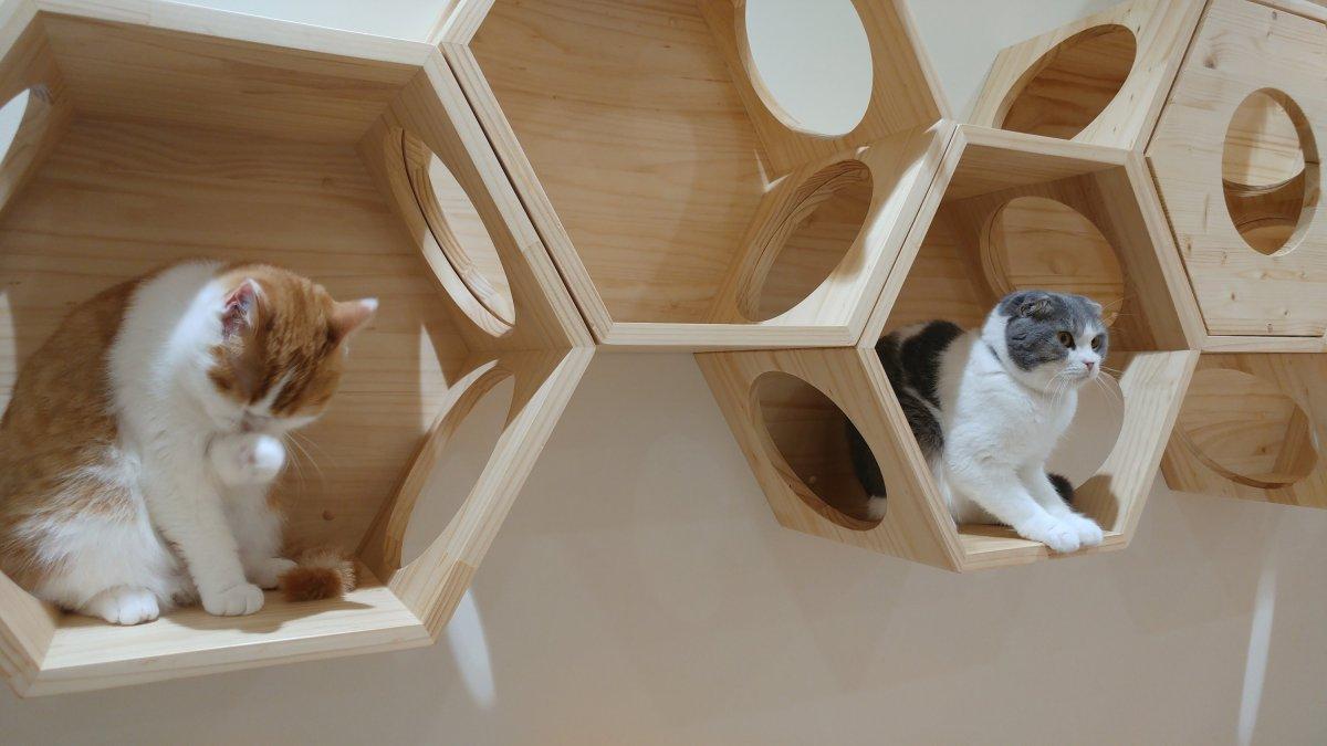 JET Programme: Cats & MallRats